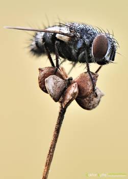 Morning Fly