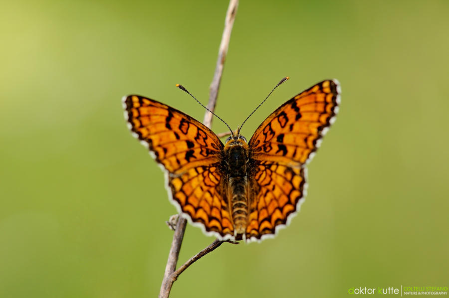 Butterfly - DK2 by Stefano-Coltelli
