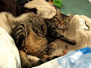 Fat Cat 3