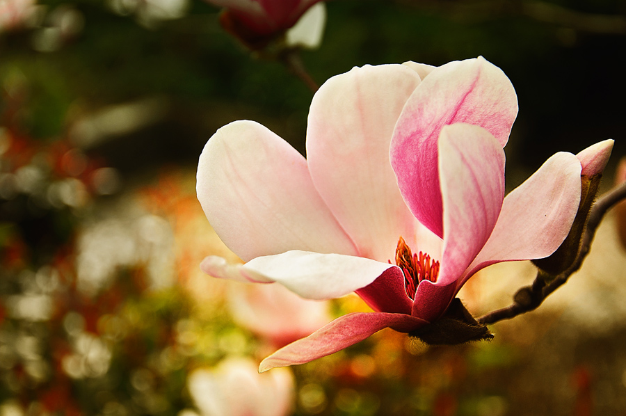 Hello Spring by DevUmt