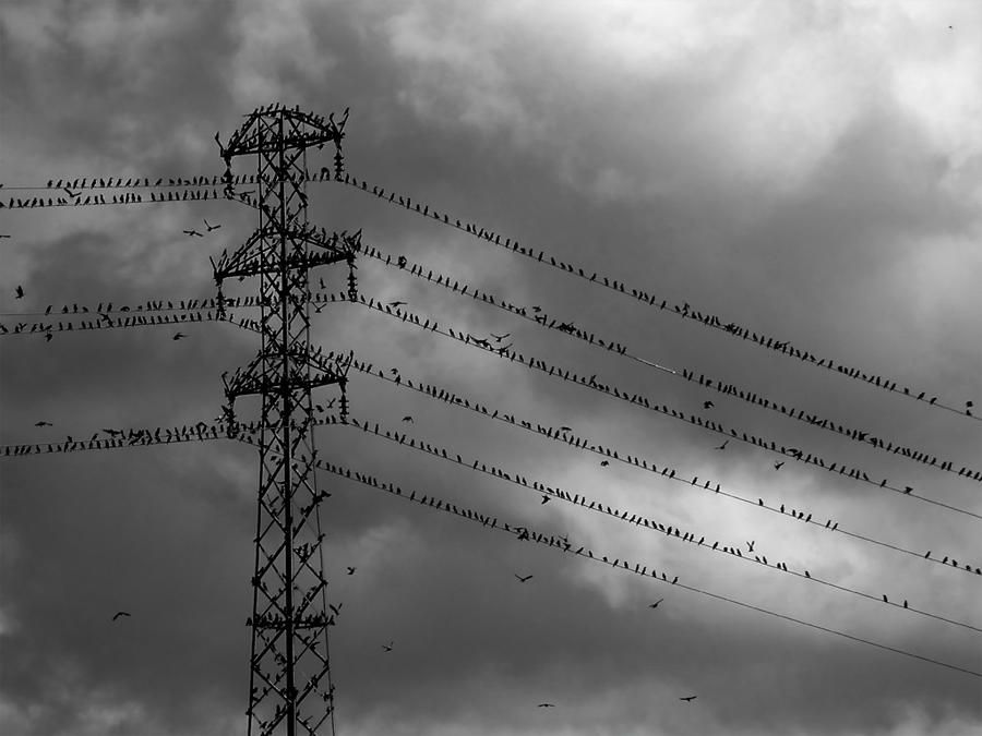 birds by DevUmt