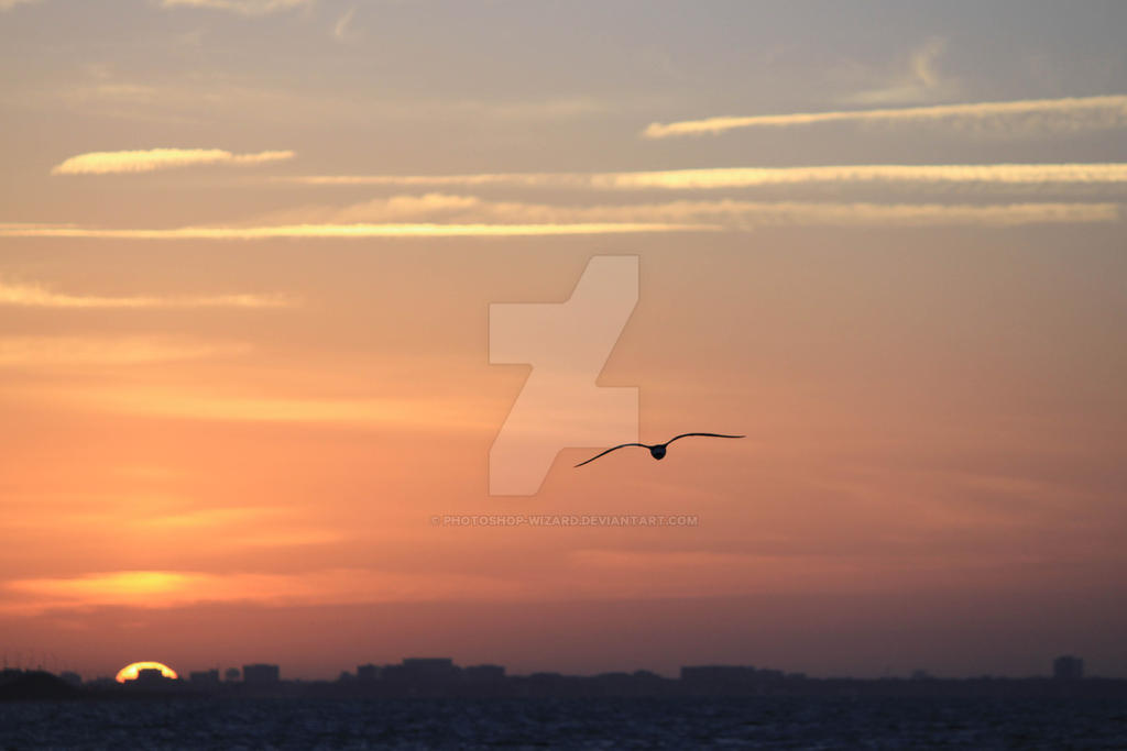 Early Bird by Photoshop-Wizard