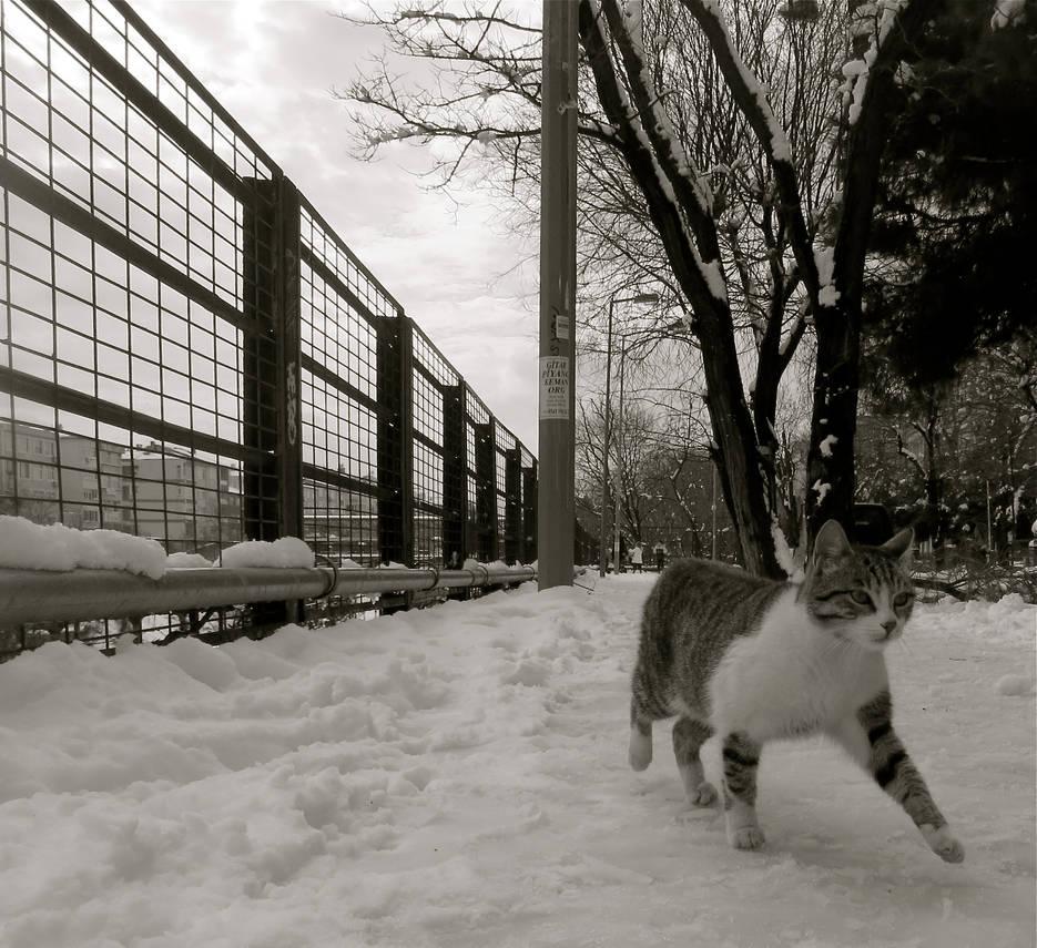 karli kedi ii by contemporaryhart