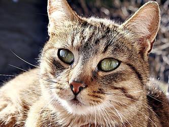 cat. by Casiula