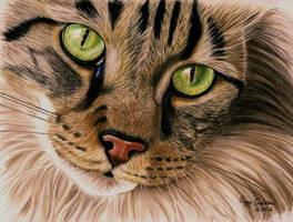 Eyes of Emerald Green by anniecanjump