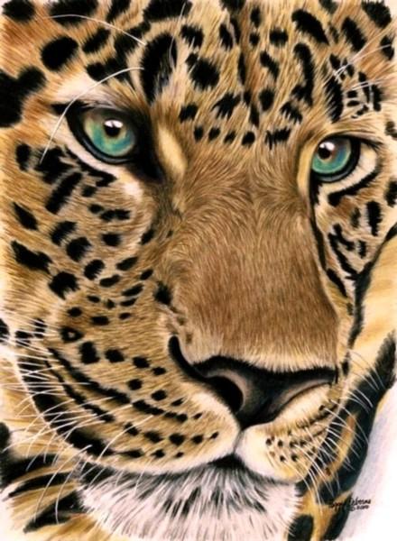 Leopard Stare by anniecanjump