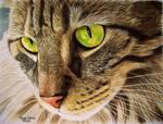 Green Eyed Tabby