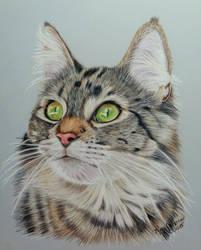 Cat on Drafting Film by anniecanjump