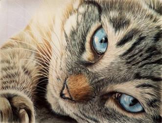 Eyes of Blue by anniecanjump