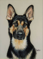Shepherd Ruger by anniecanjump