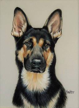 Shepherd Ruger