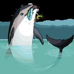 Random dusky dolphin