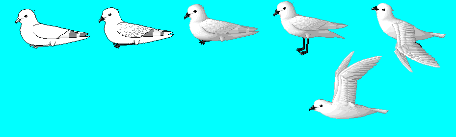 Snow Petrel: 4th incarnation by Shirukiba