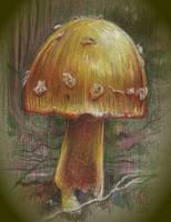 Mushroom by MJBivouac