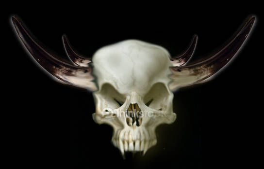 Demon skull photo-manipulation