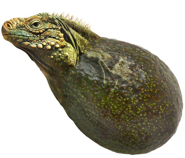 Iguanacado by Kalwadi