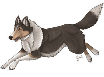 Tri-Colored Rough Collie by FluteMaestro