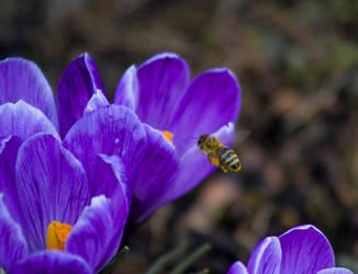 Spring Visit by MiakadoArts