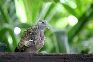 Zoo dove by AstNav