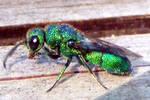 Green Bug 4