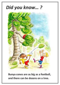 Did You Know: Bunya Tree