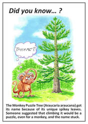 Did You Know: Monkey Puzzle Tree