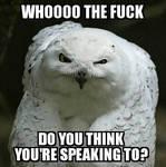 Owl Meme