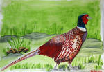 Male pheasant by S4MMY4RT