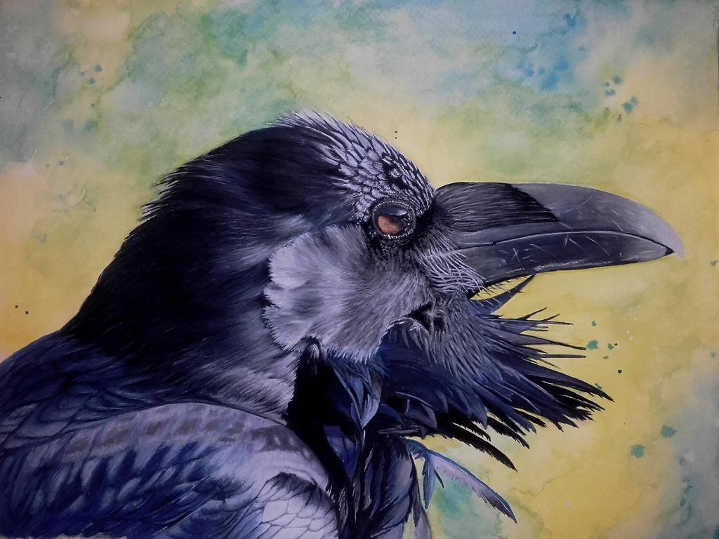Corvid Collection - Raven