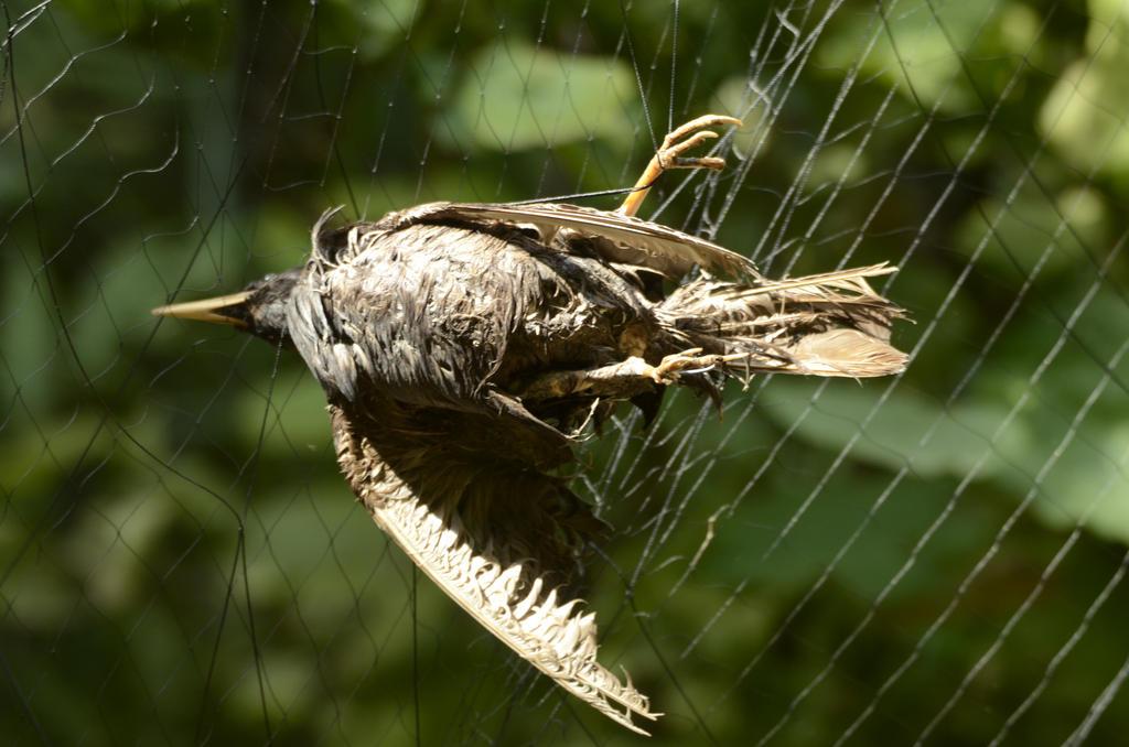 Dead bird 1 by fallen-cherubim