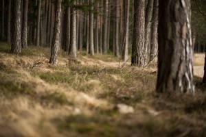 Forest 8 by fallen-cherubim