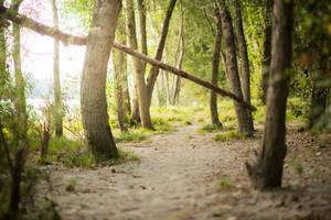 Forest 9 by fallen-cherubim