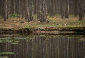 Forest 14 by fallen-cherubim