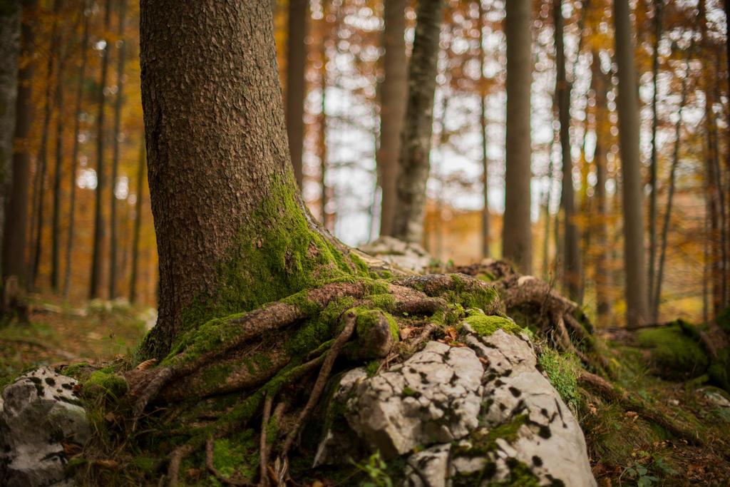 Tree by fallen-cherubim