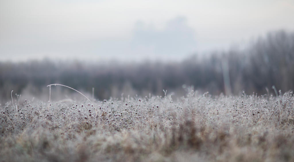 Frost 1 by fallen-cherubim