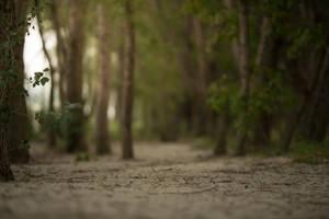 Sand Forest by fallen-cherubim
