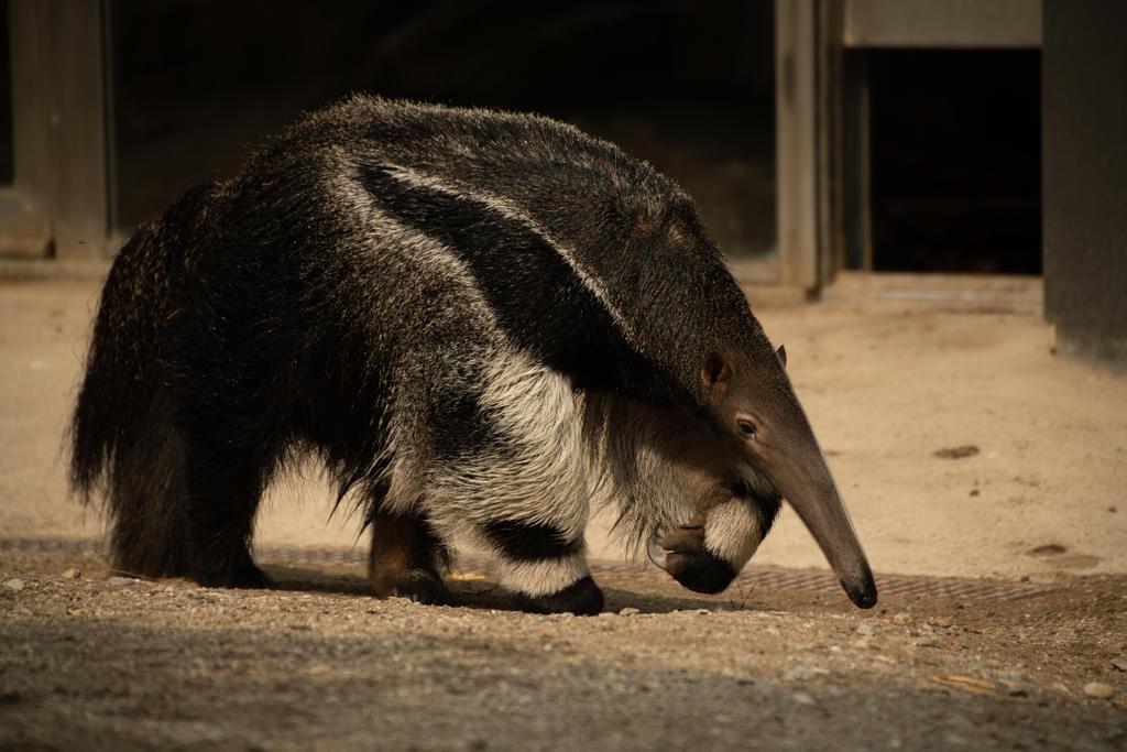 Anteater 1 by fallen-cherubim