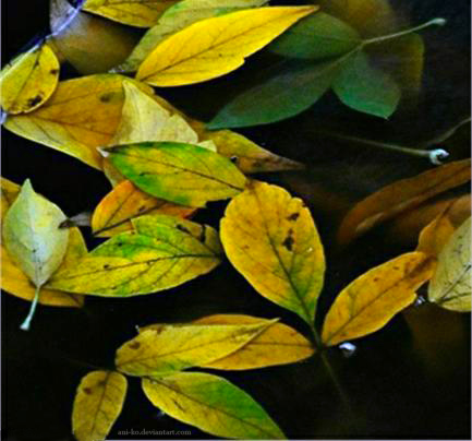Rainy autumn by Ani-ko