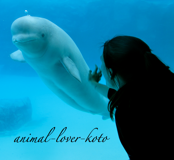 animal-lover-koto's Profile Picture