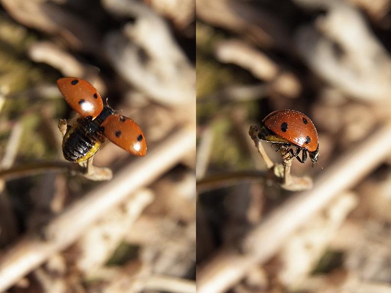 Ladybug by SweetNatalii