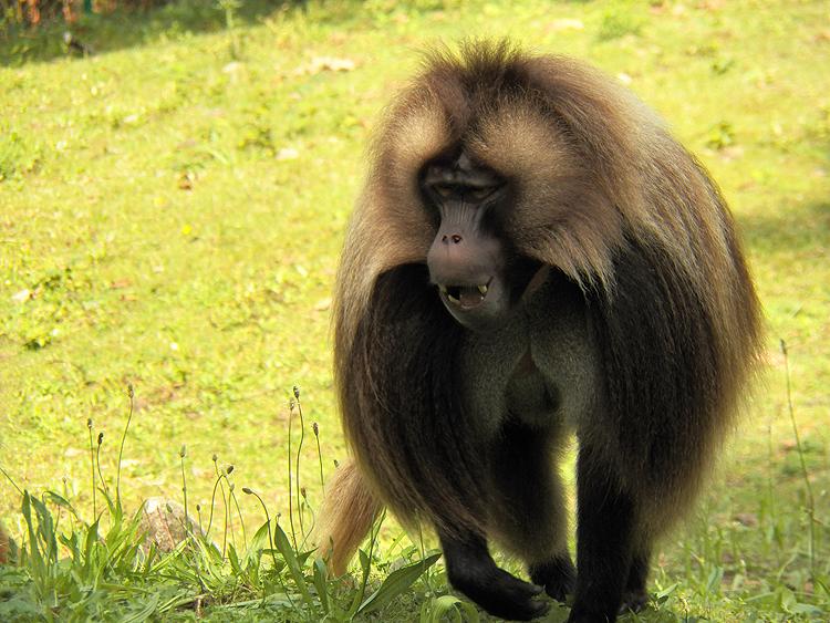 Monkey by SweetNatalii