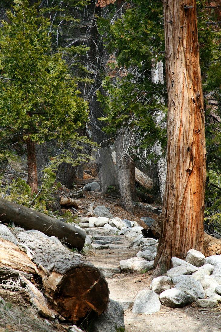 Hiking Path by daniellemasucci