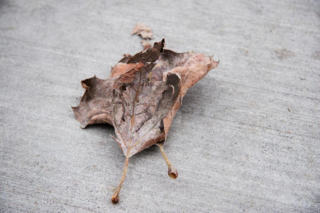 Curled Leaf by daniellemasucci