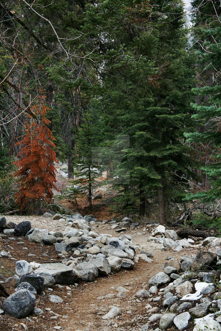 Stone Lined Hiking Path by daniellemasucci