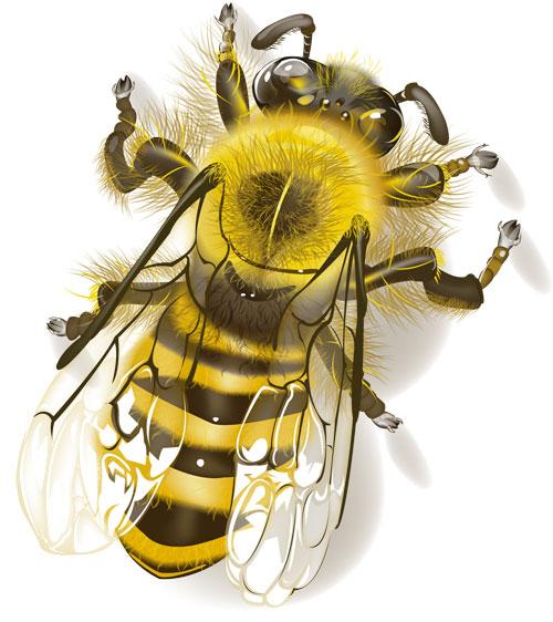My Tiny Bee by hannahmcgill