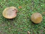 Fungi Couple
