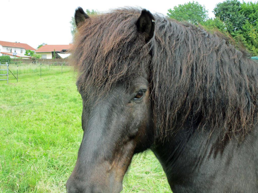 Shetland Pony Portrait by Malintra-Shadowmoon