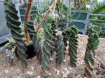 Twisted Cactuses
