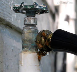 Faucet Bees by driftandflow
