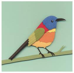 Sunbird by renton1313